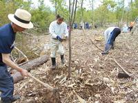 第8回「植樹祭」花いっぱいの森を作ろう!